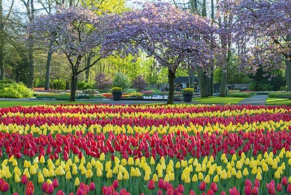 Parker med flerfargede tulipaner, påskeliljer og druehyacinter langs et tjern. Beliggenheten er Keukenhof-hagen, Nederland.