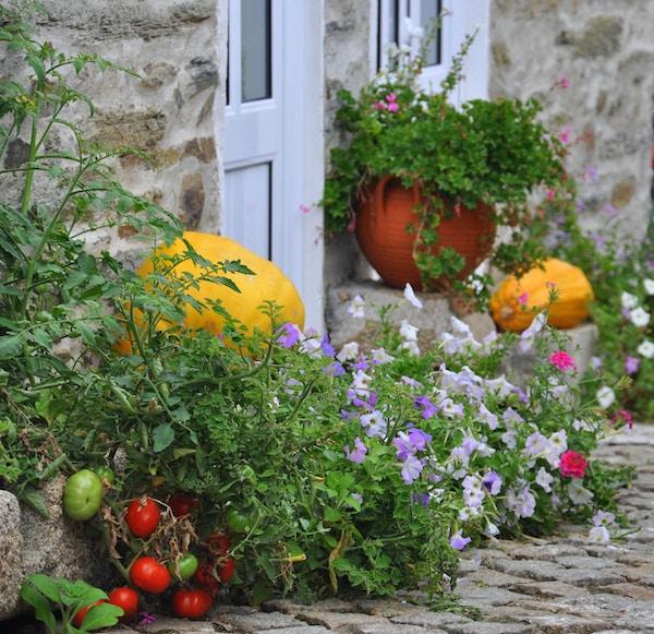 Blomster og grønnsaker langs gaten