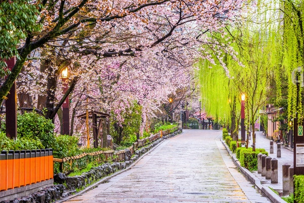 Gion Shirakawa, Kyoto, Japan om våren.