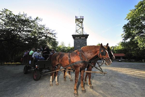 På tur med hest og vogn i skogen på Bornholm