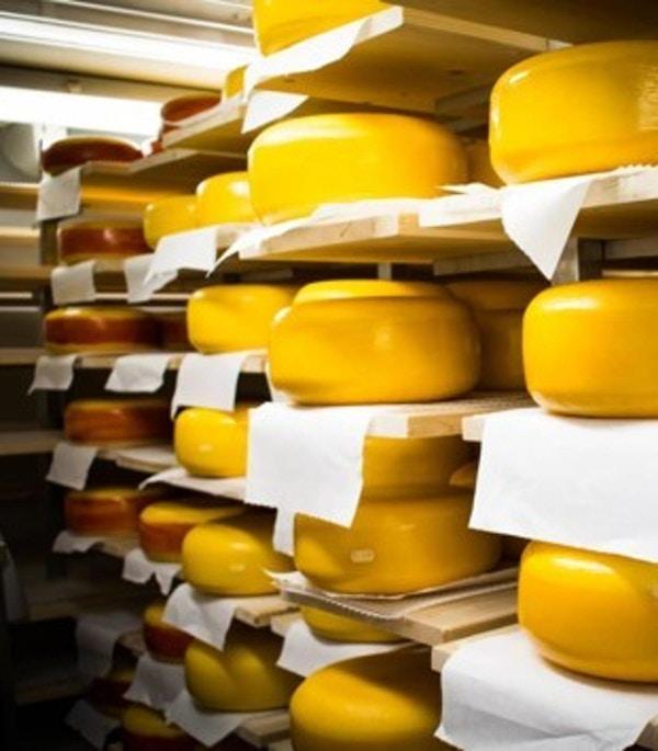 Produskjon av ost.