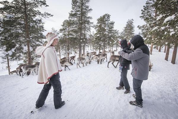Reinsdyr og mennesker i vinterlandskap.