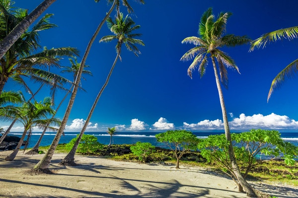 Tropisk strand og hav på øya Samoa med palmer sent på ettermiddagen