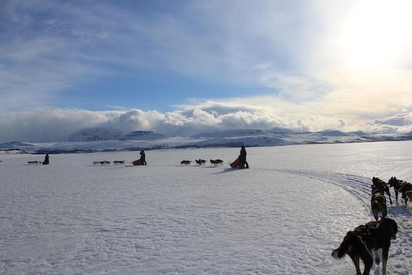 Fire hundesleder på snødekt vidde med fjell bak.