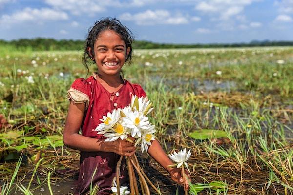 Sri Lankesisk liten jente som samler lotusblomster fra en innsjø nær Sigiriya, Ceylon.