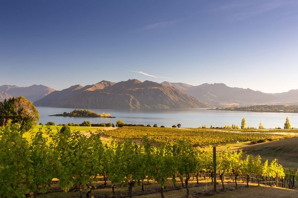 Mange gode viner kommer fra New Zealand.