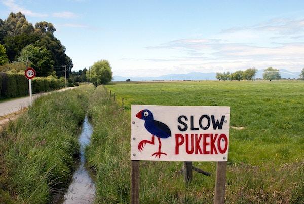 Mange sjeldne fugler (og langsomme) på New Zealand!