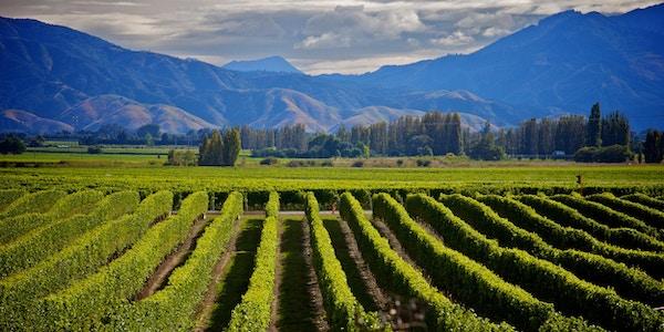 Marlborough – nydelig vinlandskap.