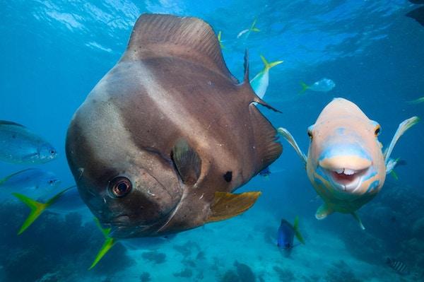 Det store barriererevet er et eldorado for dykkere.