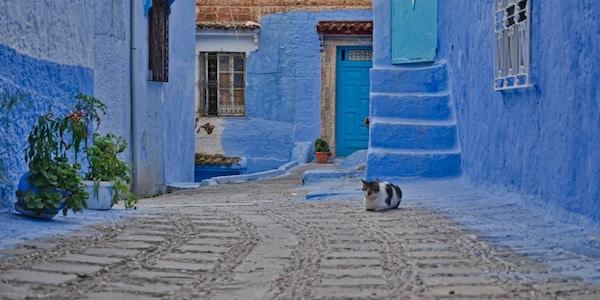 Katter på gaten i den blå byen Chefchaouen Marokko.