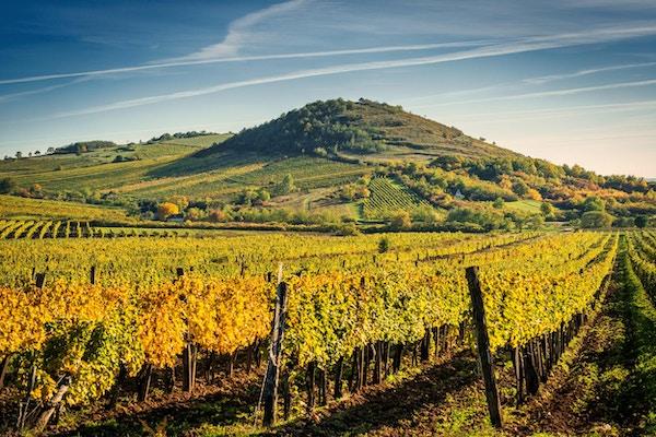 Utsikt over et vingård, Ungarn.