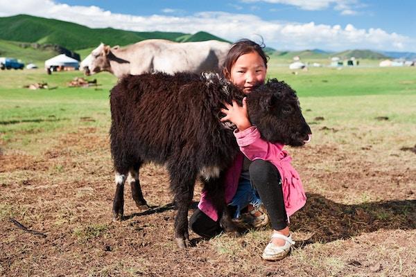 Mongolsk ung jente som leker med en yak, Mongolia.