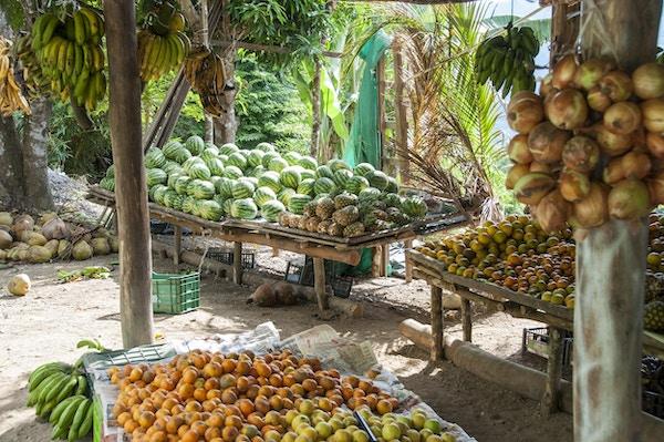 Ferske lokale frukt og grønnsaker på et utendørs marked nær Dominical, Costa Rica.