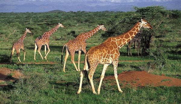 I Sør-Afrika har du mulighet til å se «The Big Five»
