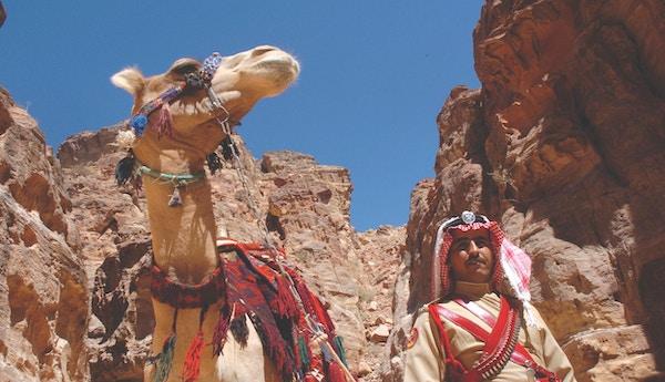Kameler er et vanlig sy i ørkenen i jordan.
