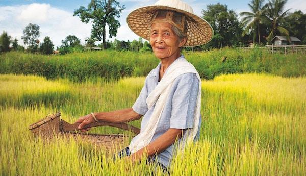 Eldre asiatisk kvinne med en vietnamesisk stråhatt.