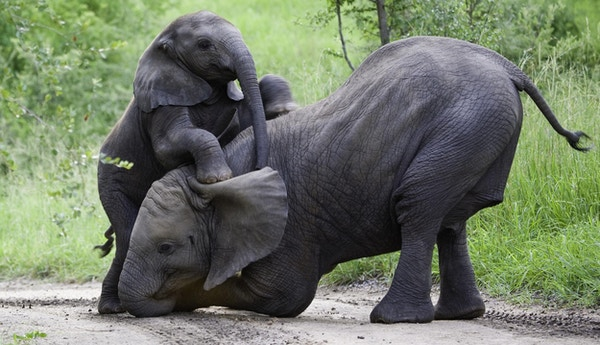 Tatt i et privat viltreservat som grenser til Kruger nasjonalpark, Sør-Afrika