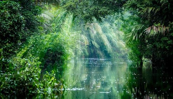 Tortuguero, Costa Rica. Regnskog med lysstråle og vegetasjon, morgen gjennom kanalene.