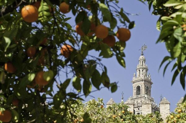 La Giralda i Sevilla, Spania.
