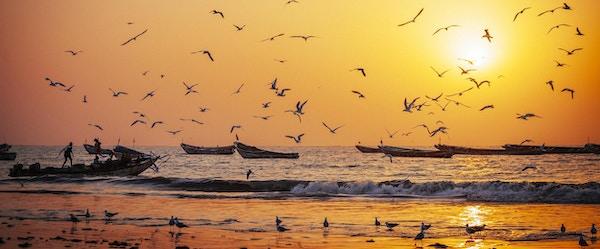 Vest-afrikanske fiskebåter i solnedgangslys.