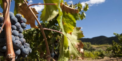 Istock 000015094405 vin drue spania