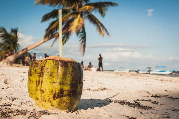 Kokosnøtt med to sugerør og en palme på stranden ved Playa Paraiso, Tulum, Quintana Roo, Mexico.