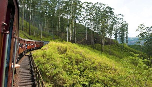 Reis med tog gjennom naturskjønne fjellandskap i Nuwarelia, Sri Lanka