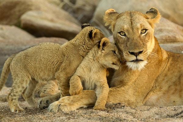 unge unger gnir seg opp mot mamma