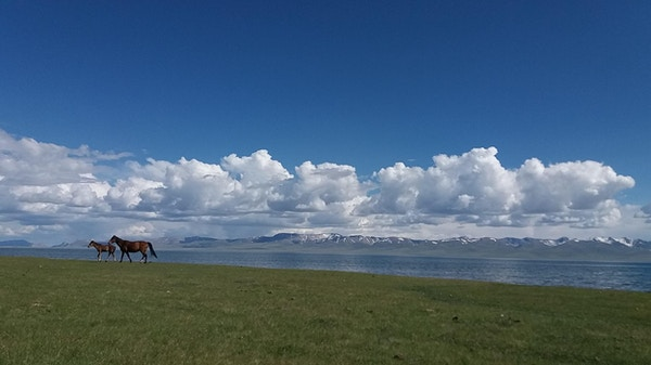 Hester ved Song Kul-innsjøen i Kirgisistan