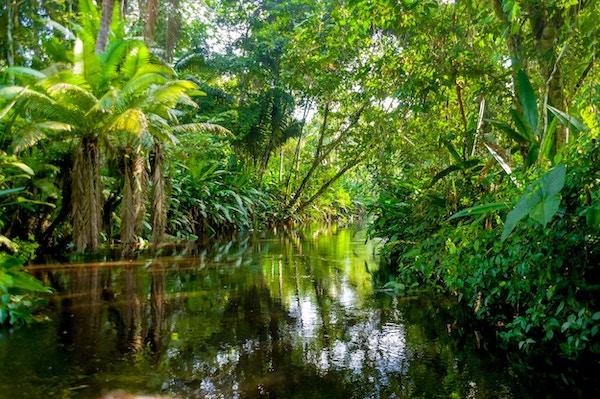 Amazonasjungelen