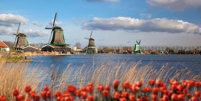 Tradisjonelle nederlandske vindmøller med røde tulipaner i Zaanse Schans, Amsterdam-området, Holland Tradisjonelle nederlandske vindmøller med røde tulipaner i Zaanse Schans, Amsterdam-området, Holland