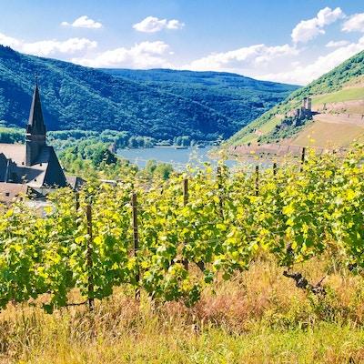Utsikt over Riesling-vingårdene i nærheten av Bingen med severdighetene Mäuseturm, Rheinknie og Burg Ehrenfels