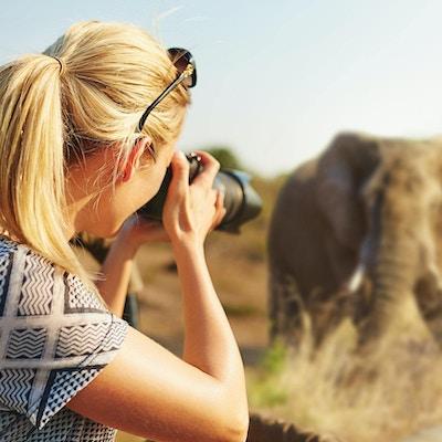 Et beskåret fotografi av en kvinnelig turist som tar bilder av elefanter mens hun er på safari