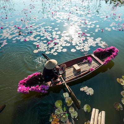 Yen-elv med robåt som høster vannlilje i Ninh Binh, Vietnam