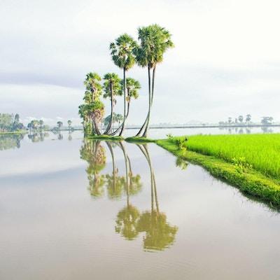 Mekong-deltaet i Sør-Vietnam er en enorm labyrint av elver, sumper og øyer, hjem til flytende markeder, pagoder og landsbyer omgitt av rismarker. Båter er det viktigste transportmiddelet, og turer i regionen starter ofte i den nærliggende Ho Chi Minh-byen (tidligere kjent som Saigon) eller Can Tho, en yrende by i hjertet av deltaet.