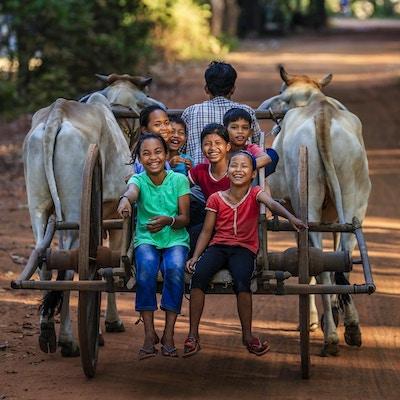 Gruppe av glade kambodsjanske barn som rir oksevogn i landsbyen nær Siem Reap, Kambodsja