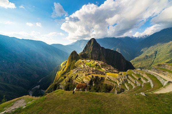 Utsikt over Machu Picchu med lama i forgrunnen