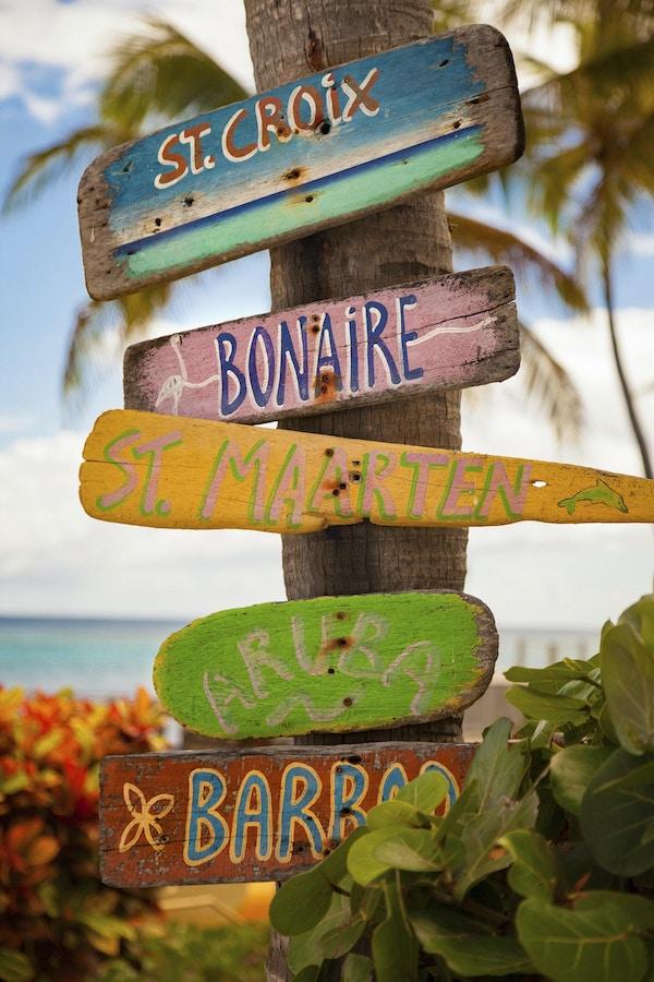 biter drivved med håndmalte navn på karibiske øyer festet til et palmetre i St.Croix, De amerikanske jomfruøyene