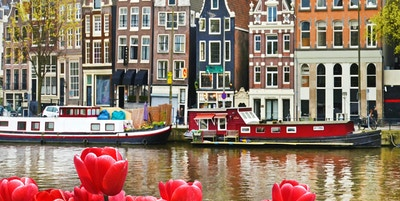 Nydelig landskap med tulipaner og hus i Amsterdam, Holland (gratulasjonskort - konsept)