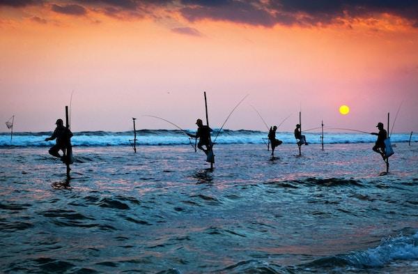 Silhuetter av de tradisjonelle stiltefiskerne ved solnedgangen nær Galle på Sri Lanka