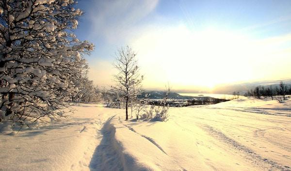 Snødekte trær i norsk fjellskråning med varm solnedgang.