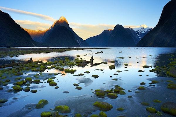 Milford Sound, på New Zealands South Island, og det innkommende tidevannet begynner å dekke over lavdekket stein på fjæra.