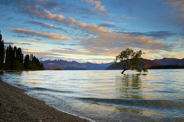 Tidlig morgensol treffer toppene i de sørlige alpene utenfor Wanaka-sjøen. I forgrunnen vokser et tre i det grunne vannet nær innsjøen.