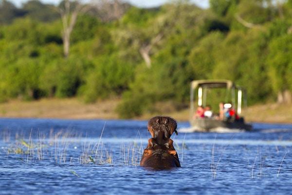 En flodhest gjesper ved en nærmer seg turistbåt på elven Chobe i Botswana