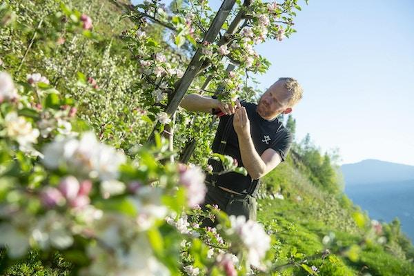 Mann med epletrær i Hardanger