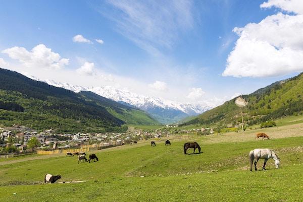 """""""Panoramautsikt fra toppen av fjellet Mestia ved byen Mestia, som ligger i Samegrelo-Zemo Svaneti-regionen. Hvert hus hadde sitt eget forsvarstårn til tider, men i dag står det fortsatt et par dusin. Noen er i dårlig stand, i ruiner, mens andre er vakkert renovert. Befolkningen er for det meste Svans, en kulturell og språklig undergruppe av georgierne. I fronten fugler og hester på den grønne eng. """""""