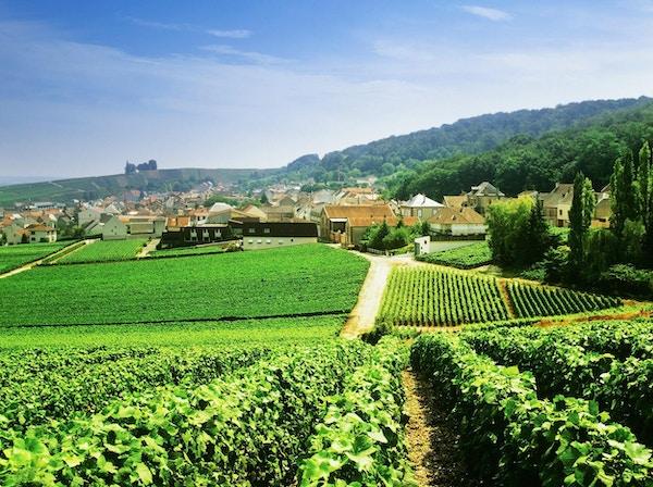 utsikt over champagne-vingårder som sleper byen Épernay, Champagne-regionen, Frankrike