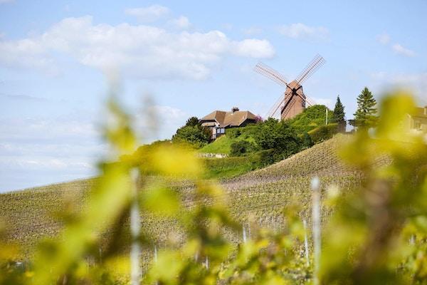 """""""Tvers over champagnevingårdene mot den berømte vindmøllen i Verzenay, som ble bygget i 1818 på toppen kjent som Mont Boeuf. Dette historiske monumentet eies nå av GH Mumm champagnehus og er omgitt av Grand Cru champagnedrue- vingårder som lager den fineste champagnen og ligger i Montagne de Reims regionale park nær Reims. På bakketoppen tjente vindmøllen som en observasjonspost under første og andre verdenskrig."""""""
