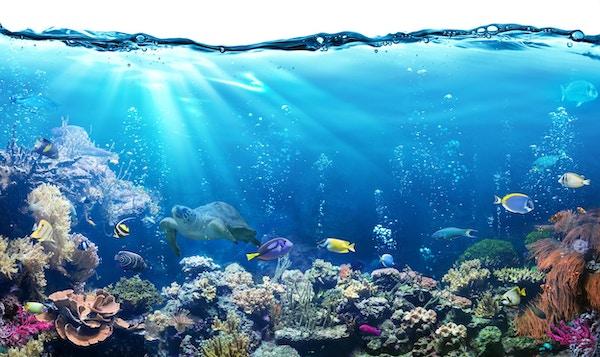 Great Barrier Reef med dyreliv