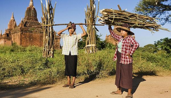 Portrett av burmesiske kvinner som bærer trestammer på hodet, Bagan, Myanmar.